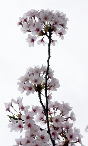 spring-1058479_1920