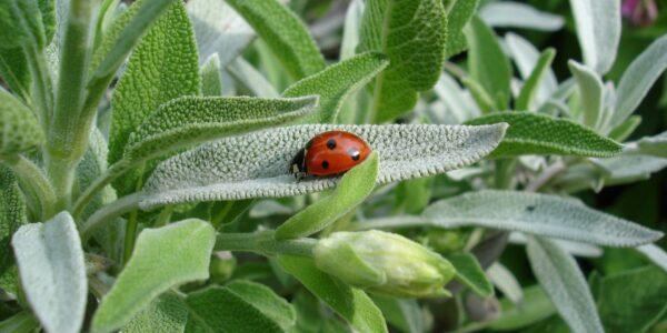 ladybug-1428899_1920